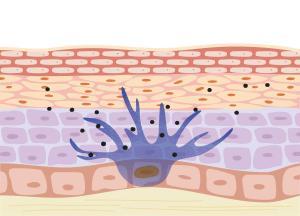 功效性测试 博溪生物 皮肤修复屏障修复保湿抗皱光老化光损伤美白